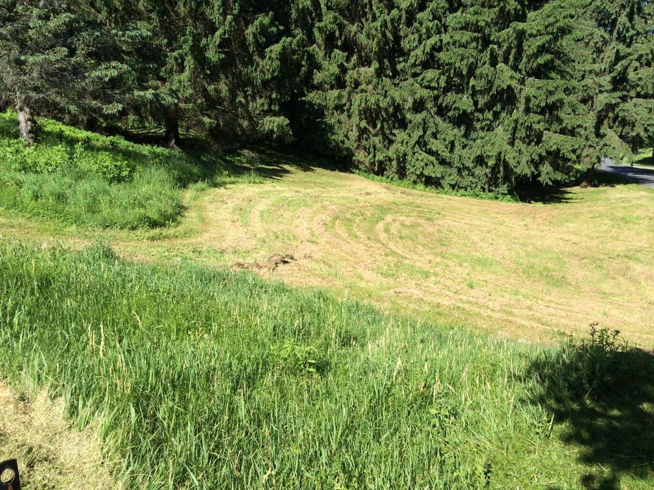 Grassmasters Landscaping Brush Hogging Project