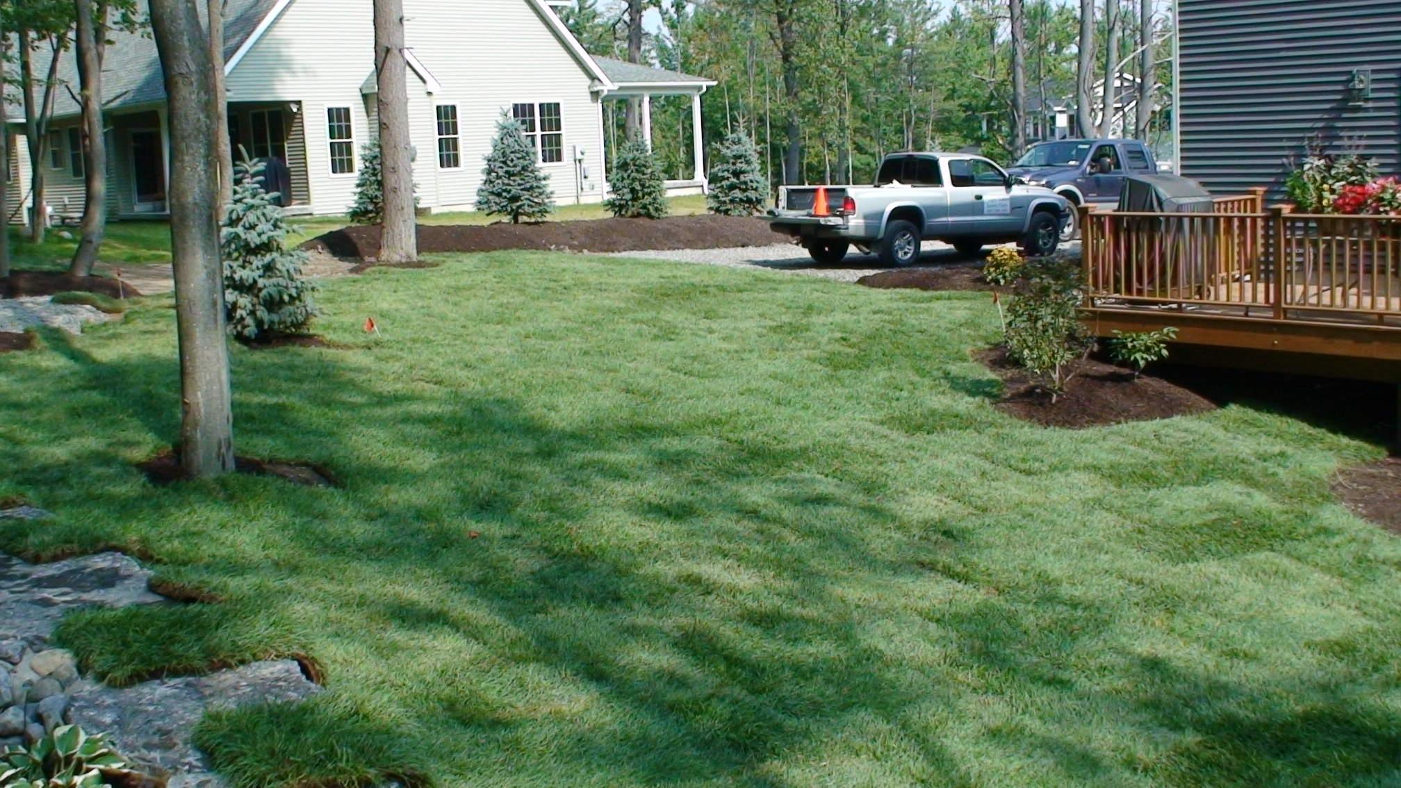 Grassmasters Landscaping New Lawn Installation 1