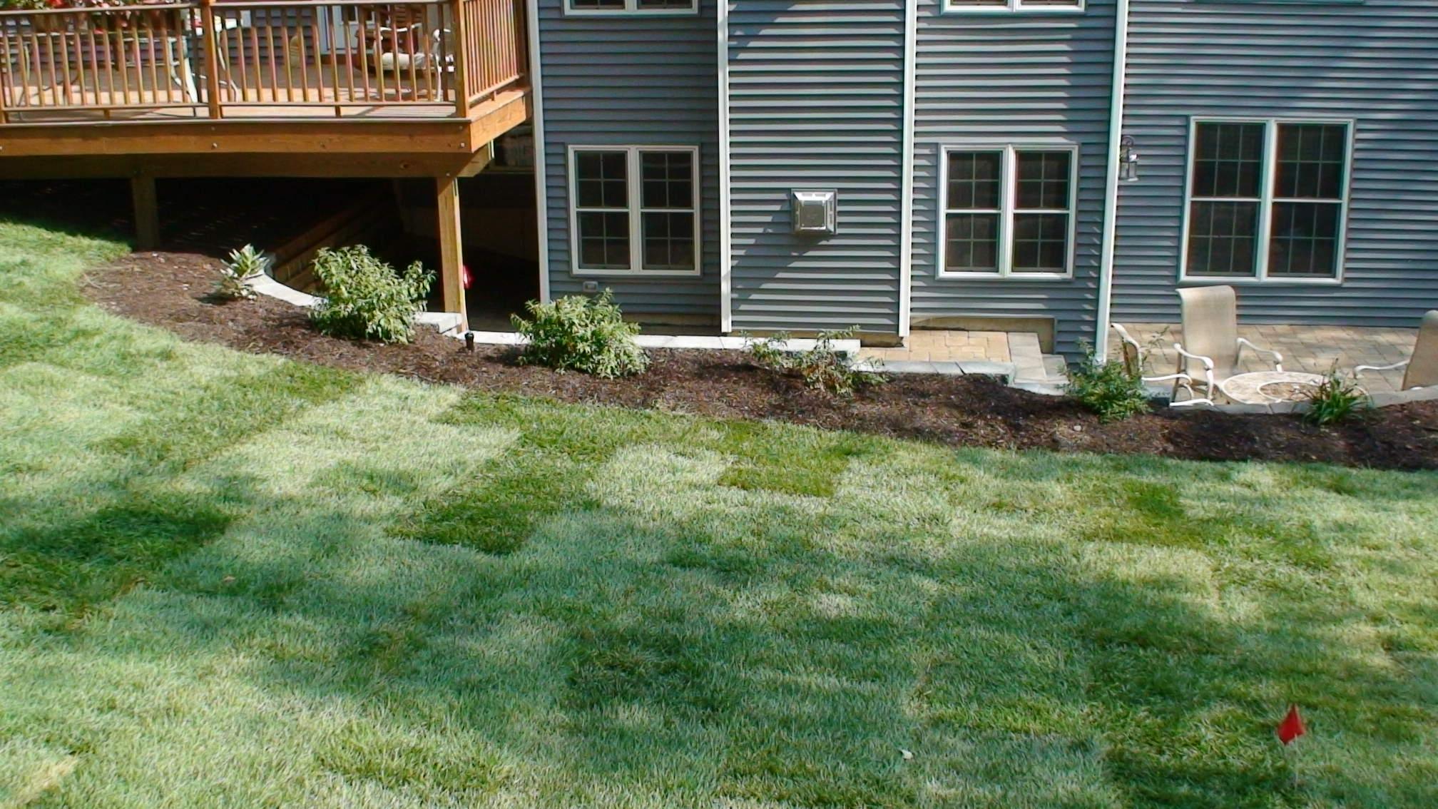 Grassmasters Landscaping New Lawn Installation 2