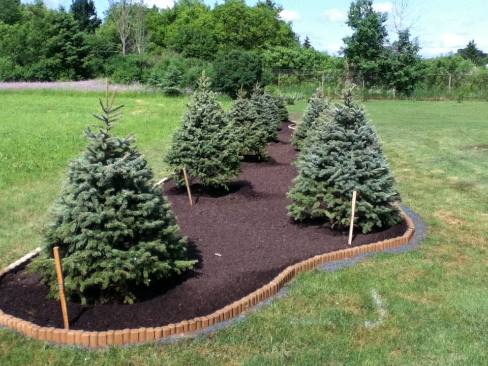 Grassmasters Landscaping Mulching Project 12